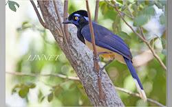 南米で出会った野鳥(South American birds)