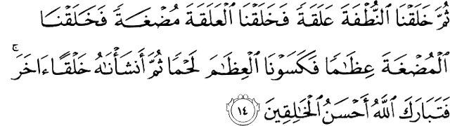 Kandungan Surah Al-Mu'minun Ayat 12–14