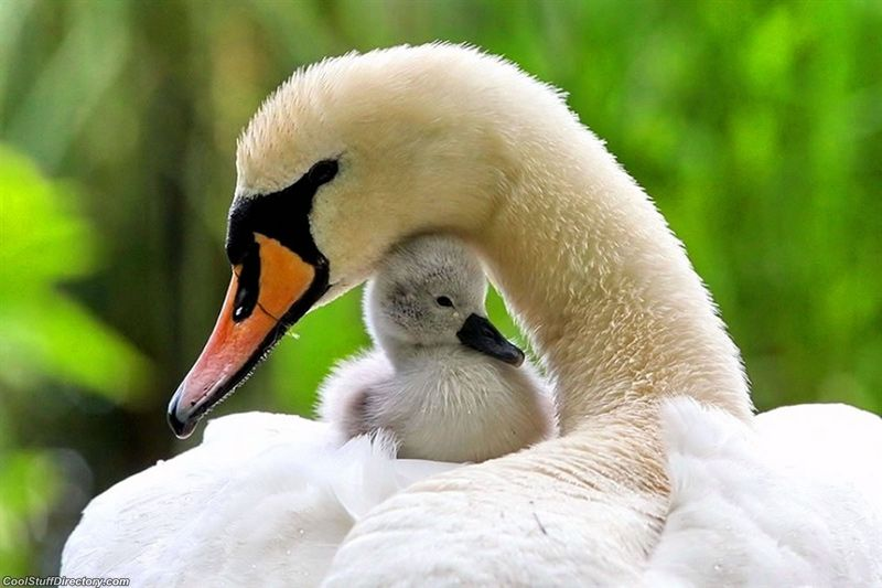 Adorable Examples of Animals Parental Love