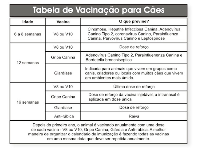 Cronograma de vacinas para cães