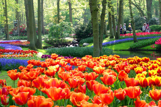 Keukenhof: The Garden of Europe