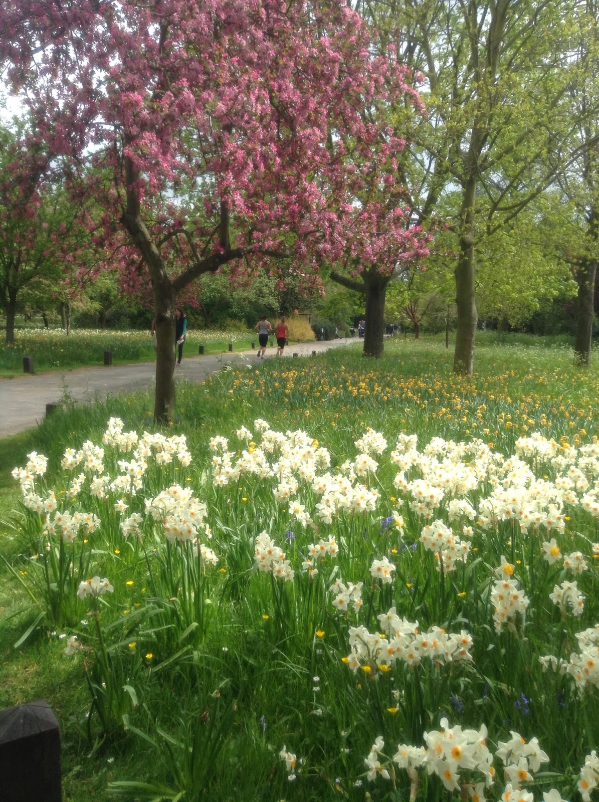 Early Spring Blossoms in the Wilderness, Hampton Court Gardens, Photo by Mercurelli's Garden Design