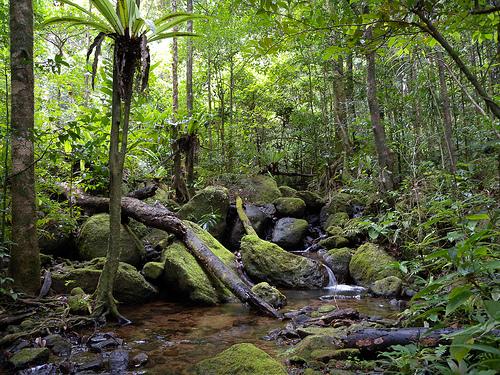 Pemandangan Hutan Tropis Yang Menakjubkan