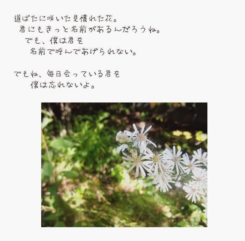 名前も知らない花