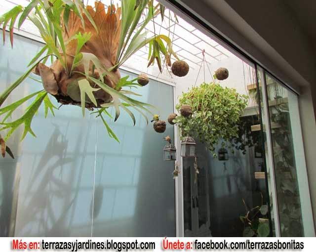 Jardin de invierno terrazas y jardines fotos de jardines for Jardin de invierno decoracion