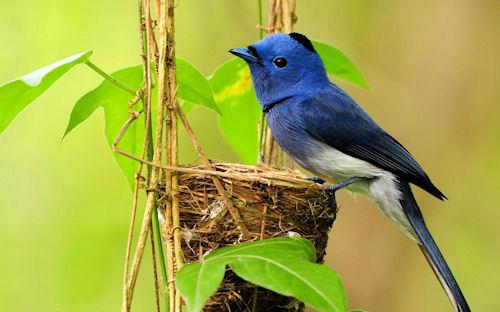 Los animales y su ecosistema (7 criaturas lindas)