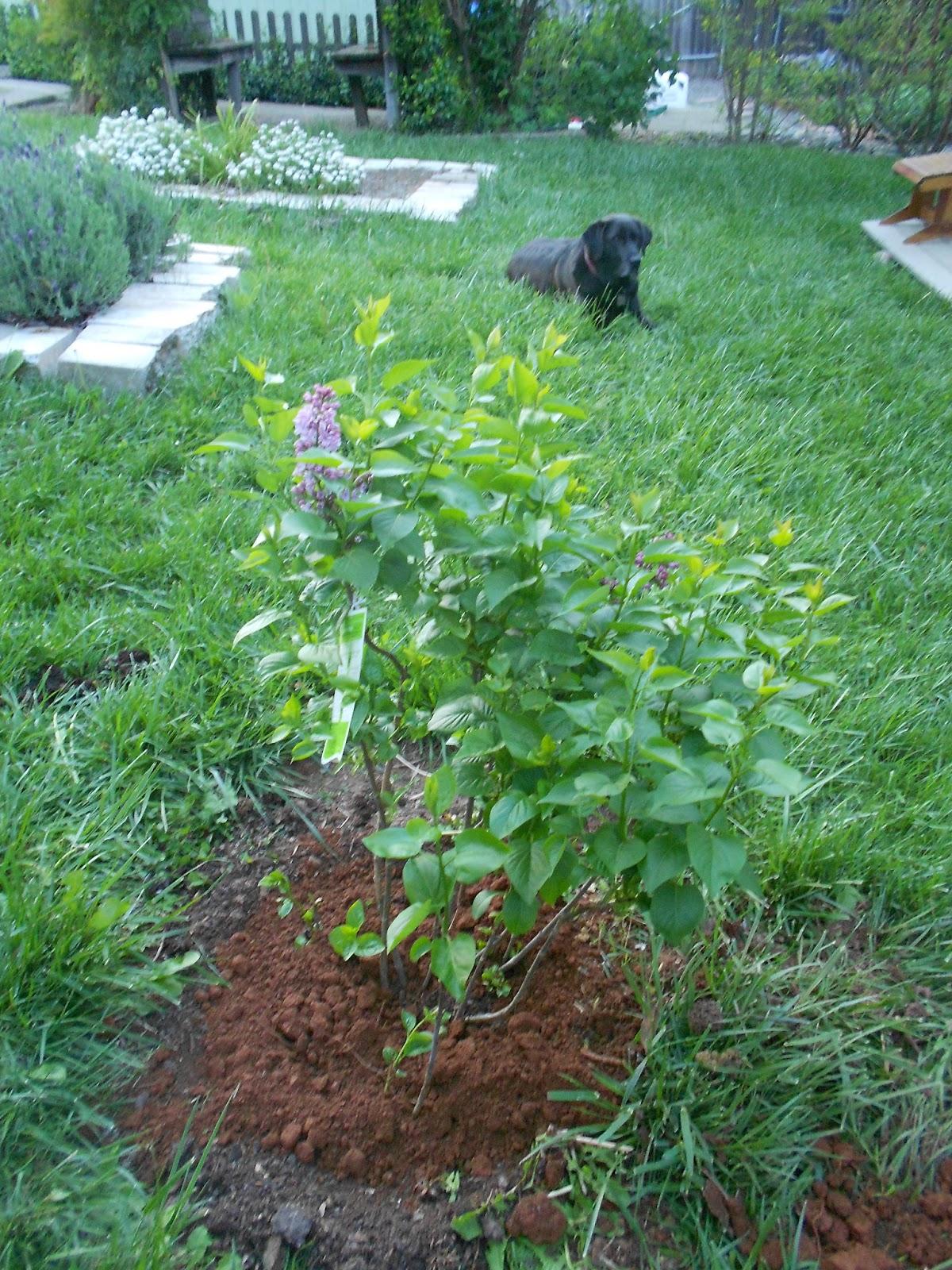 garden flowers close to home u2013 and more