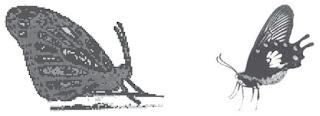 Mekanisme dan Pengertian Evolusi serta Teori Evolusi menurut Darwin