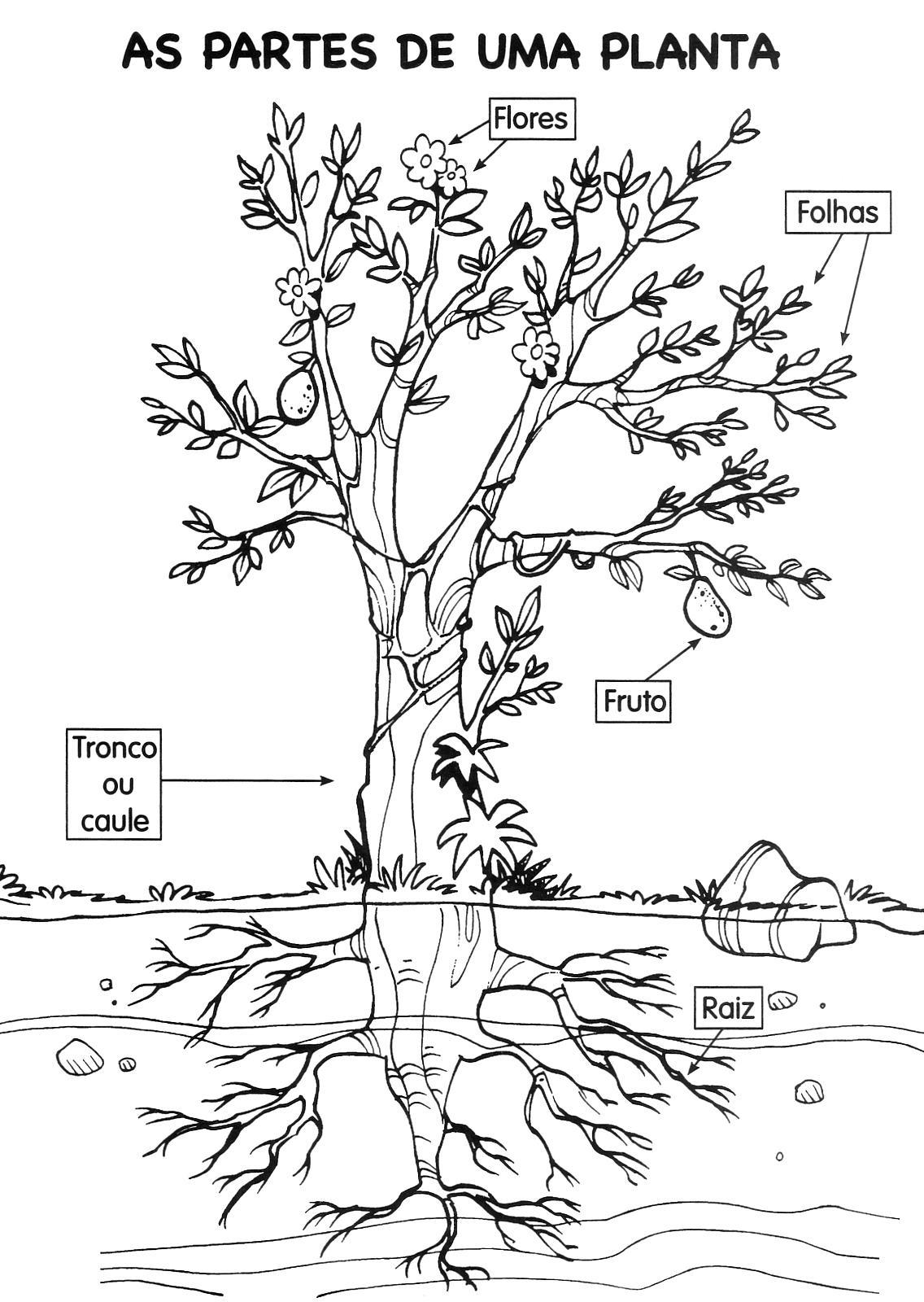 Das Plantas Flores Responsaveis Pela Formacao Do Fruto E Da Te