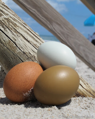 Eggs on the beach. The-Chicken-Chick.com