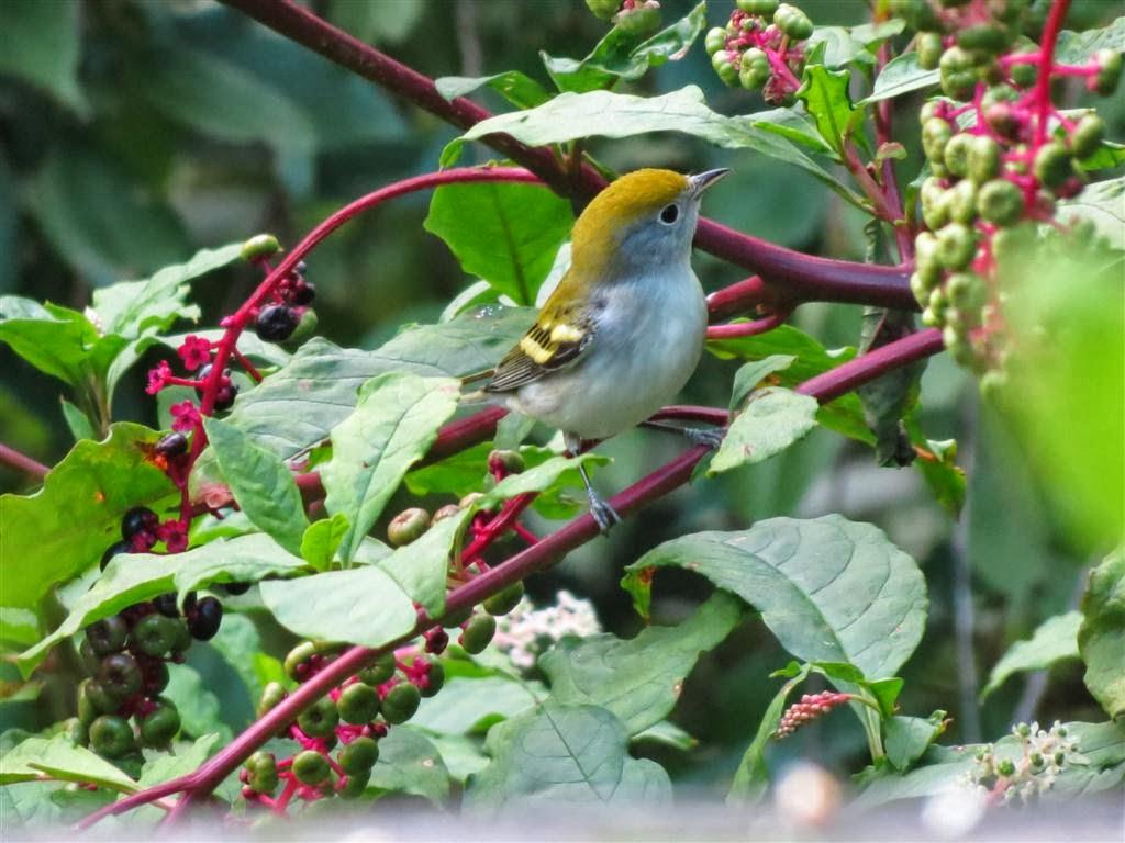 birding is fun birding my backyard