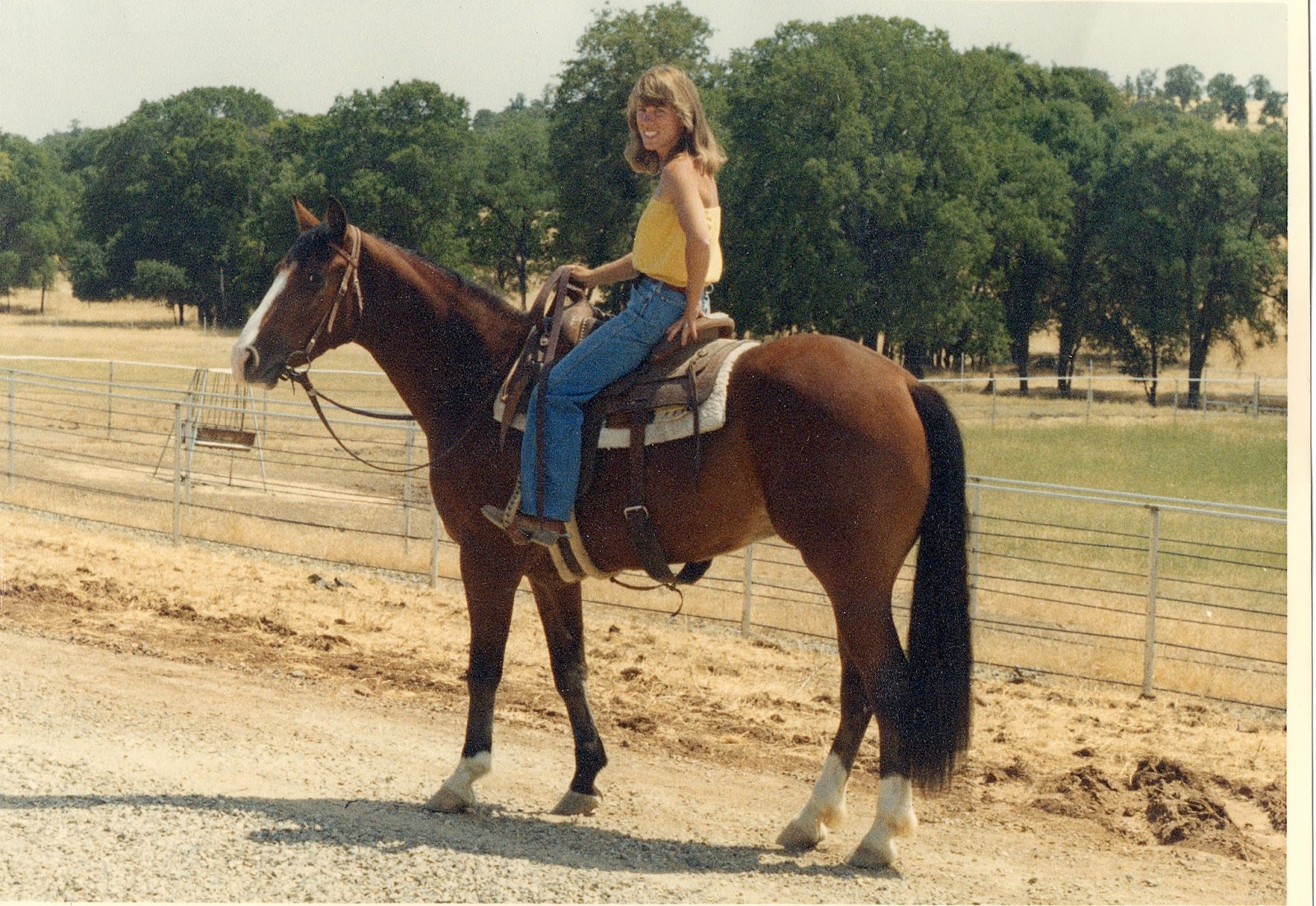 Gunner As A Three Year Old—a Green Broke Horse—i Had Put About Ninety Days  On Him At This Point