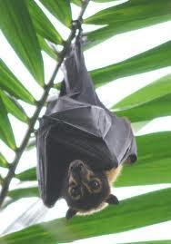 Kelelawar Pengontrol biologis penyebaran penyakit