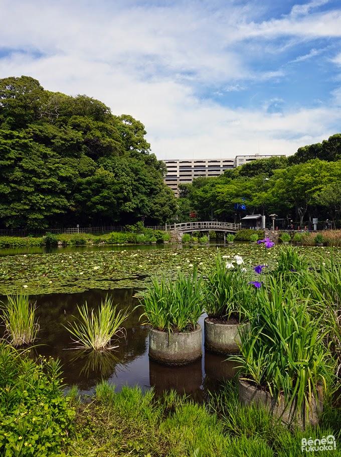 Parc Maizuru, plan d'eau