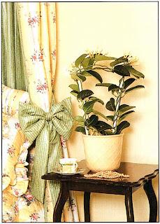 Вдыхать при пробуждении аромат живых цветов Стефанотиса обильноцветущего (Stephanotis floribunda) гораздо приятнее, чем пользоваться освежителем воздуха