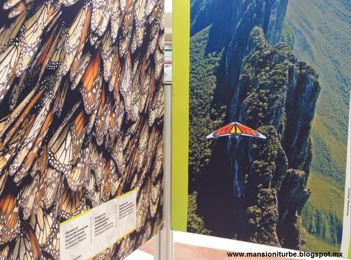 Pictures from the Exhibition: On the Trail of the Monarch Butterfly in Morelia