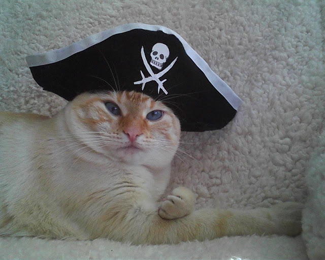 funny cat pictures, pirate cat