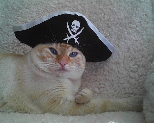 funny cat pictures, pirate cat