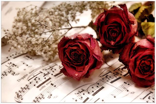 Ảnh đẹp valentine ý nghĩa
