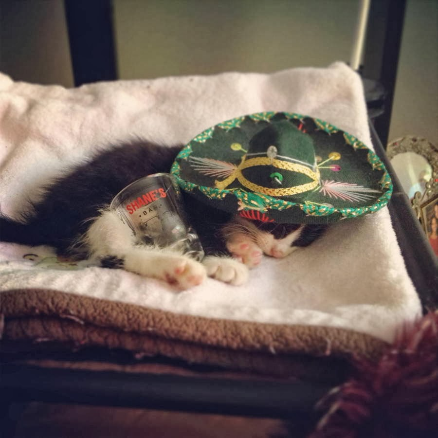 Funny cats - part 92 (40 pics + 10 gifs), kitten with sombrero sleeping