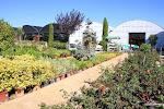 Garden Tapioles