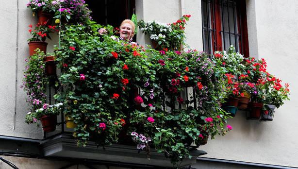 balcón,Bilbao,geranios,flores