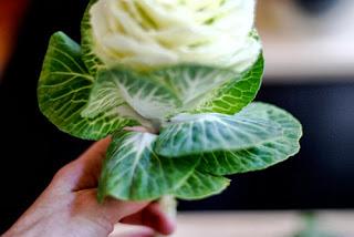 Hoa bắp cải với cách cắm độc đáo 03