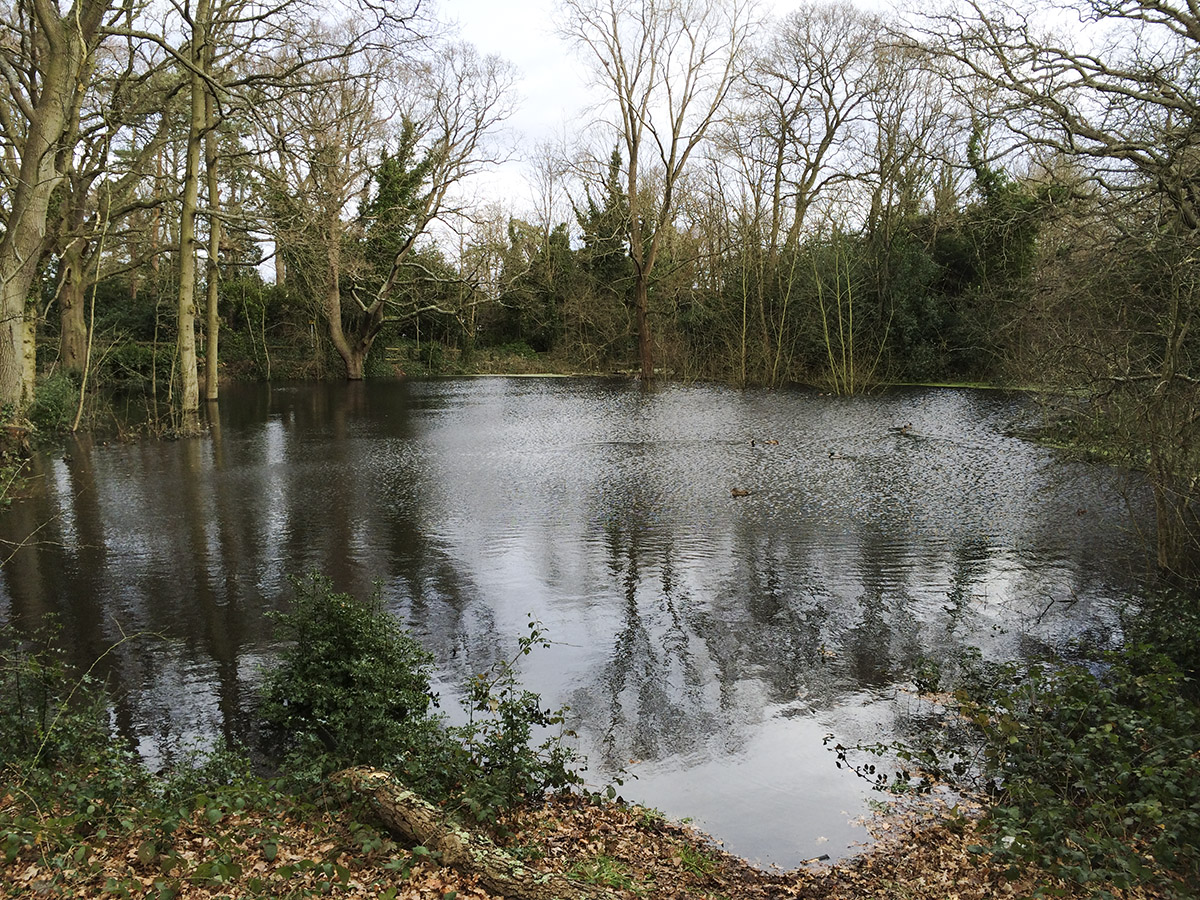 Seasonal pond, Hayes Common.  9 February 2014.