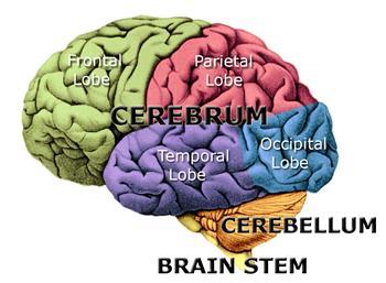 Brain Diagram9