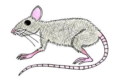 dire mouse