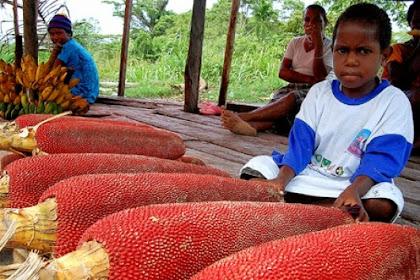 9 Manfaat Buah Merah Papua Bagi Kesehatan