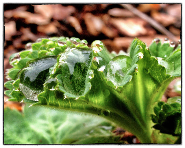 Central Park's Conservatory Garden, Raindrops, NYC