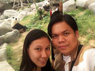 Hong Kong Ocean Park Panda
