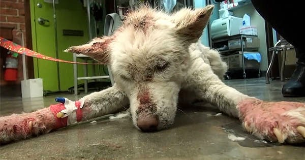A Badly Injured Dog Rescued From A Trash Dump Makes An Incredible Recovery