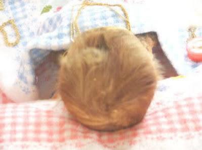 2013 04 01 173159 Misteri Mayat Bayi Tumbuh Rambut Dan Kuku
