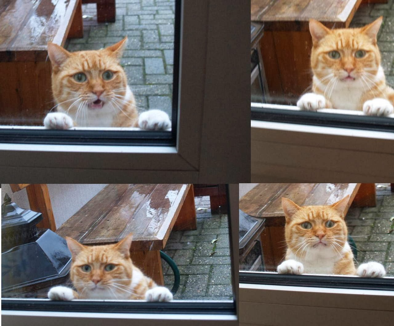 Funny cats - part 93 (40 pics + 10 gifs), sad cat wants to go inside house