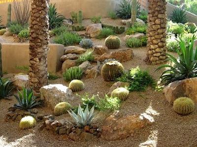 jardín de cactus en terraza azotea