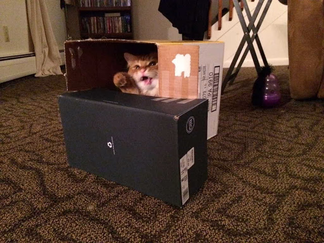 Funny cats - part 85 (40 pics + 10 gifs), cat playing in the box