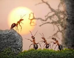 هل تصدق أن النمل يتحدث مع بعضه البعض