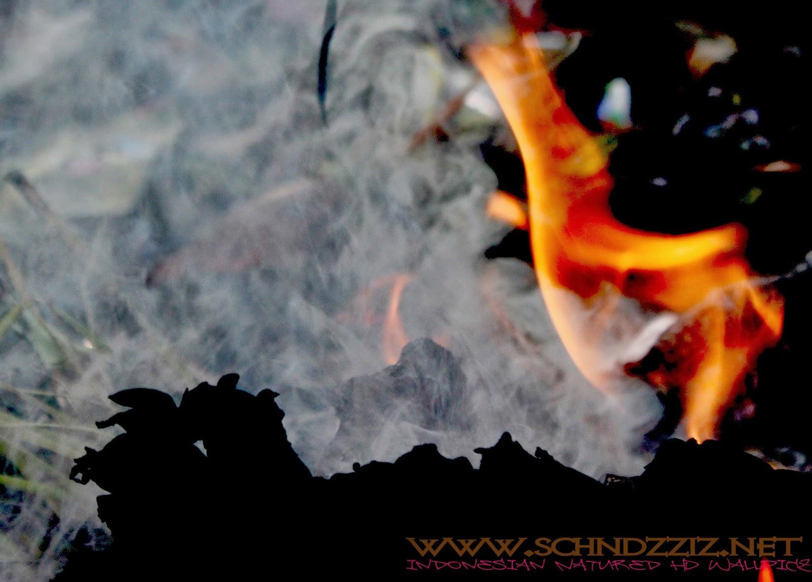 Gambar Fire Skulls Live Wallpaper 7 5 Apk Download Android