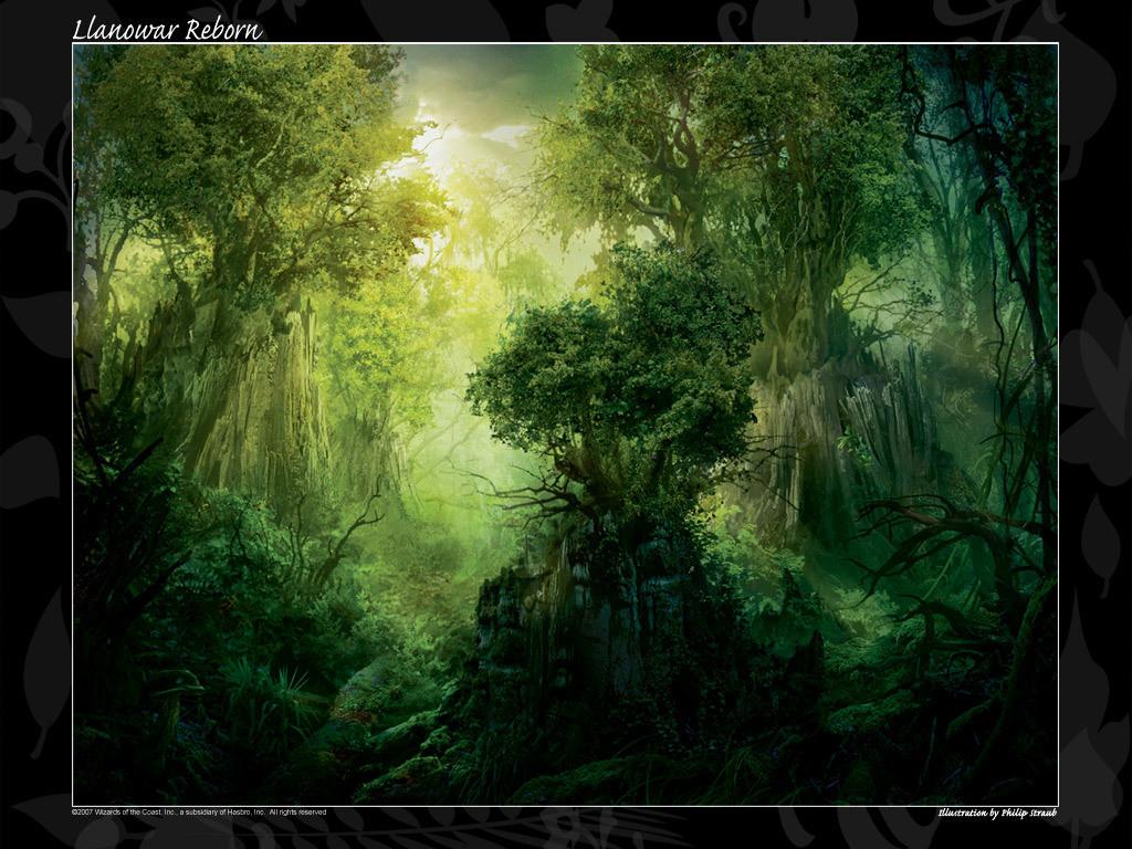 http://4.bp.blogspot.com/-1d6HCVoDRPY/Tf8Q4Ka-0II/AAAAAAAAAxY/jGRue500-hQ/s1600/enchanted-forest-t5-woods.jpg