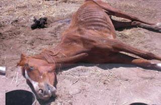 Gila!!! Pasangan Ini Melakukan Pemotretan Di Dalam Mayat Kuda