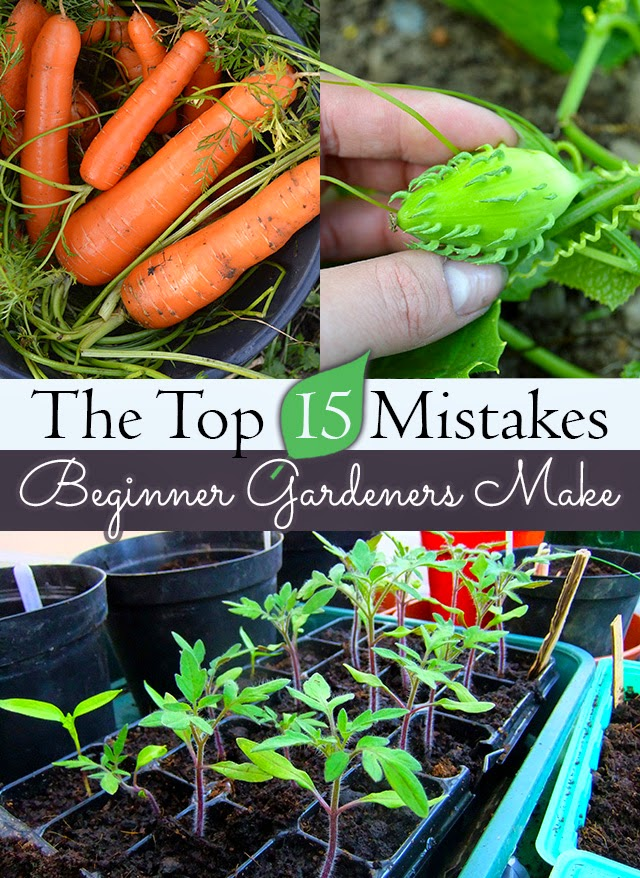 Advice to a New Gardener | 15 things you should know before digging in