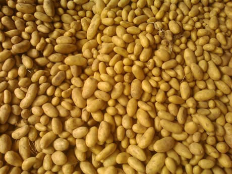 fresh_potato_suppliers