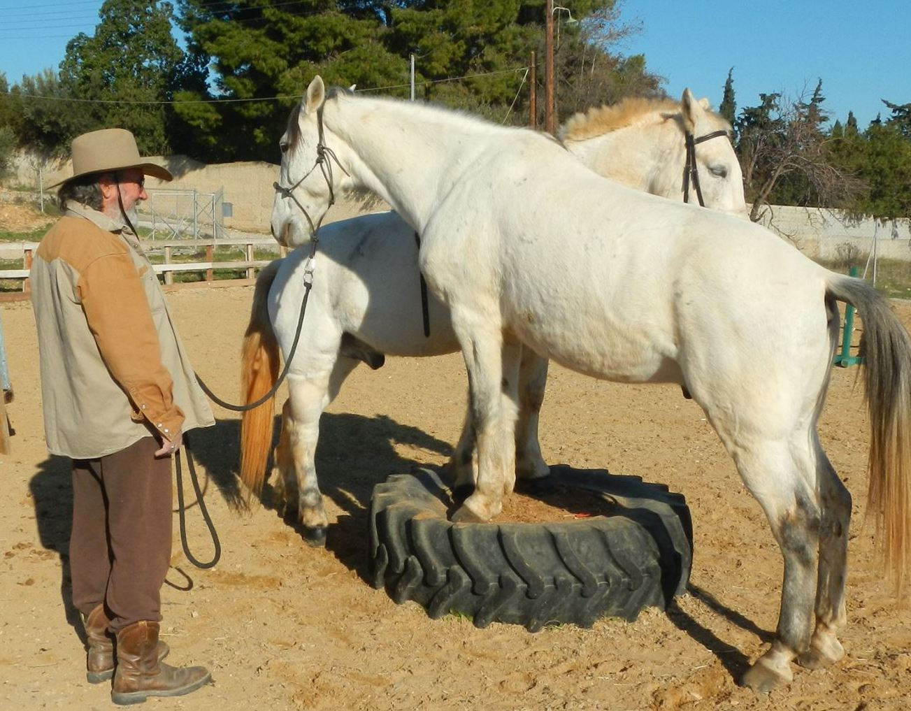 Steve Vergis, Horse trainer phone  6946665014