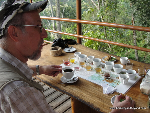 tasting kopi luwak at coffee plantation in Bali, Indonesia