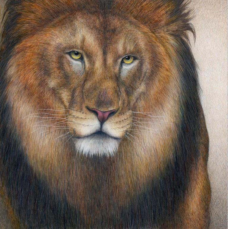 animales-pintados-con-acuarela