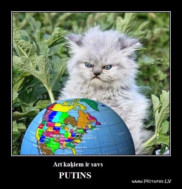 Nikns kaķis skatās uz globusu