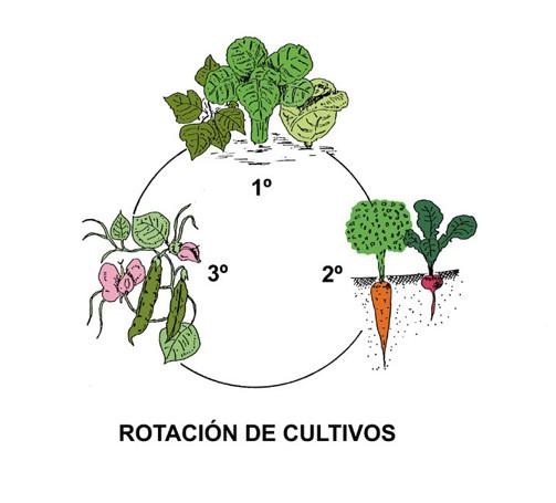 Agricultura org nica producci n de alimentos sanos la for Que es la asociacion de cultivos