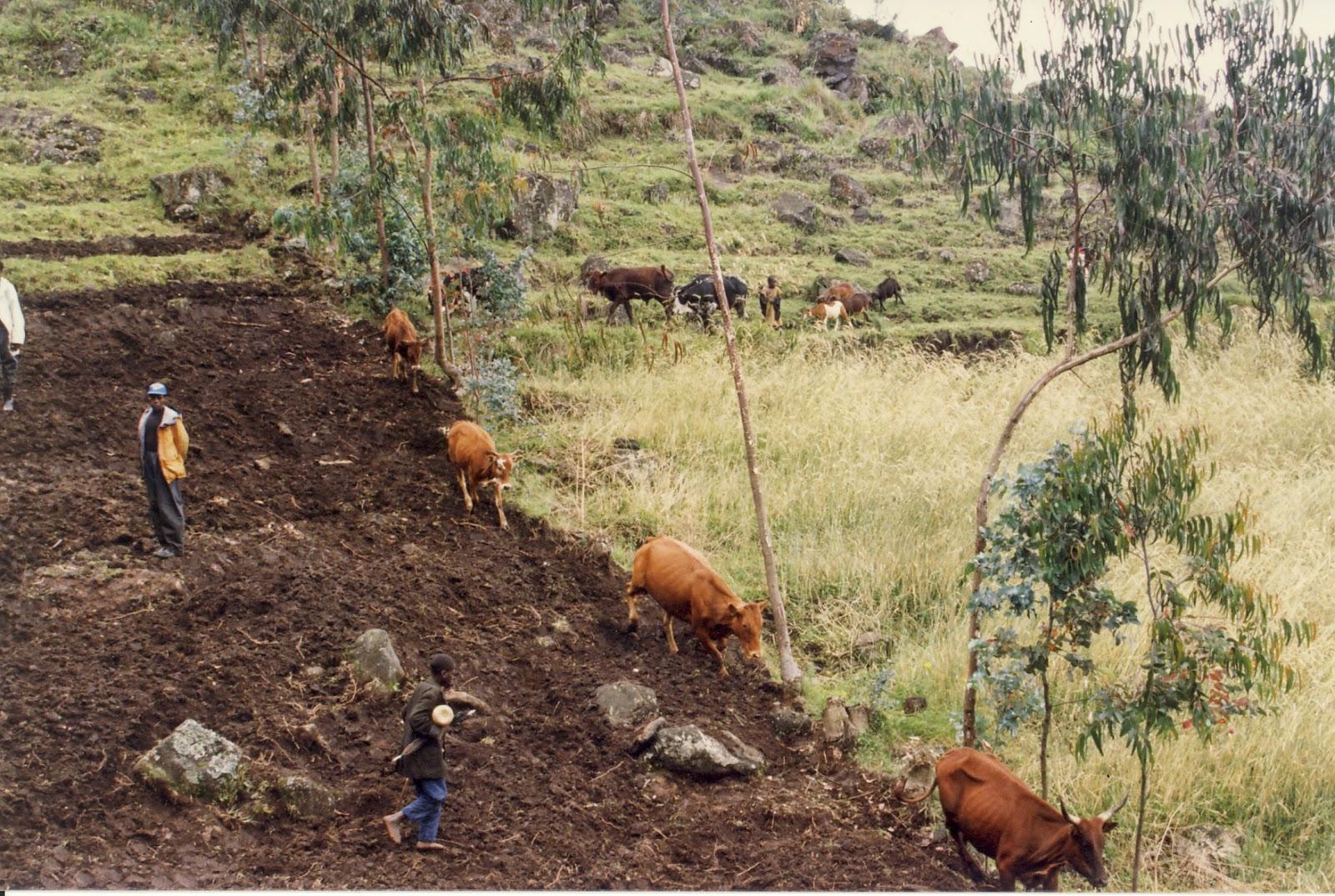 Legal ruralism march 2014 for Terrace farming model